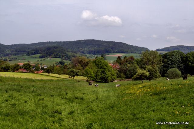 Odenwald Blick