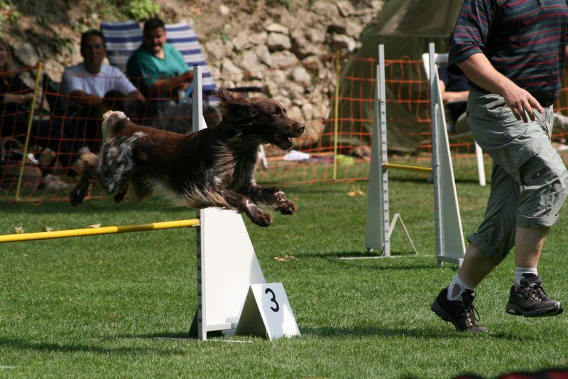 Askan springt oder fliegt