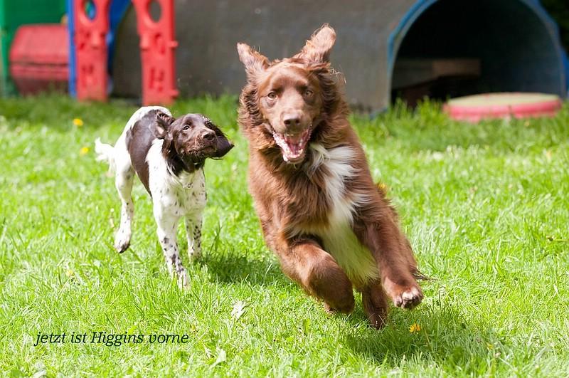 Higgins und Nora