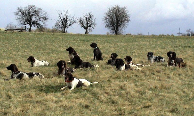 Gruppenfoto auf der Wiese