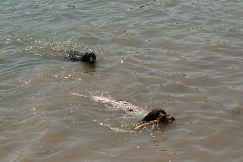 2 Schwimmende Münstis