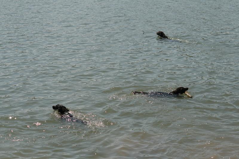 3 Schwimmende Münstis