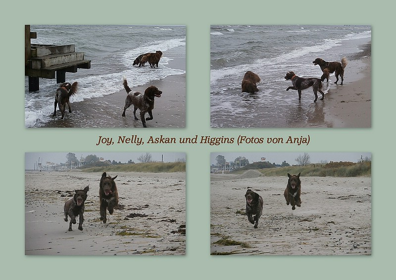Strand Bilder Anja