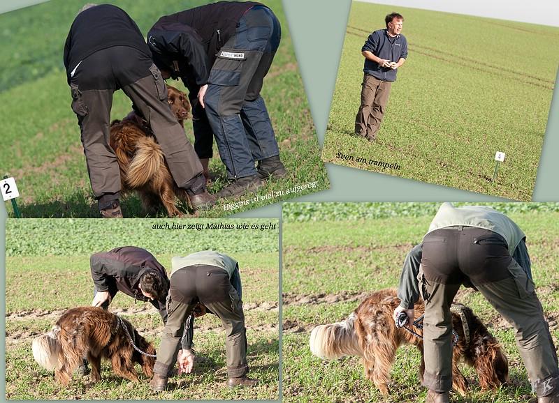 Hundeplatz Faehrtenarbeit