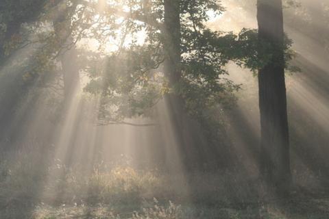 Wald im Nebel bei Heringen