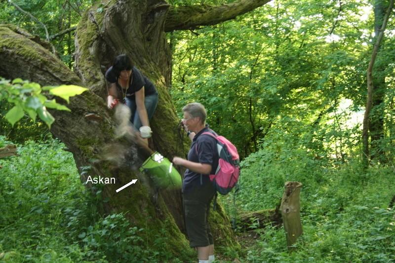 Suchbild im Baum