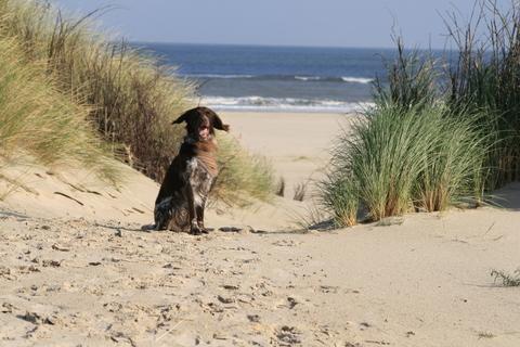 Sand-Duenen2