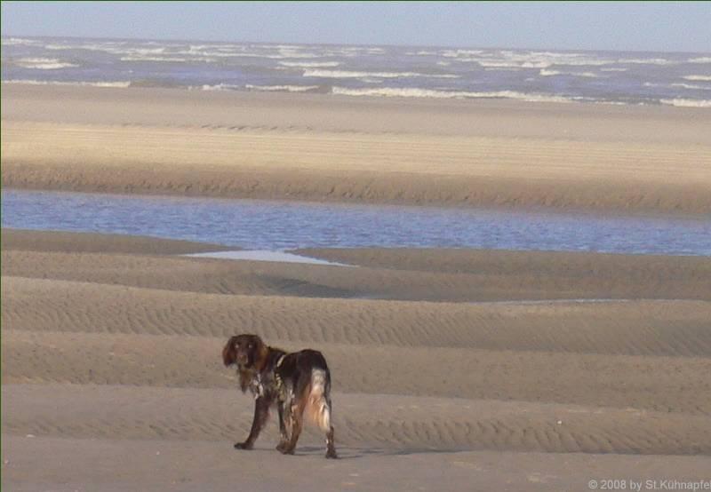 Askan vor der Sandbank