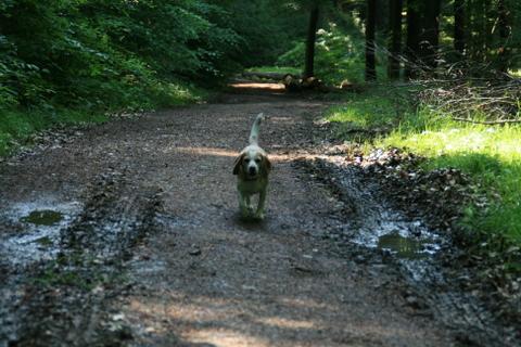 Luka im Wald