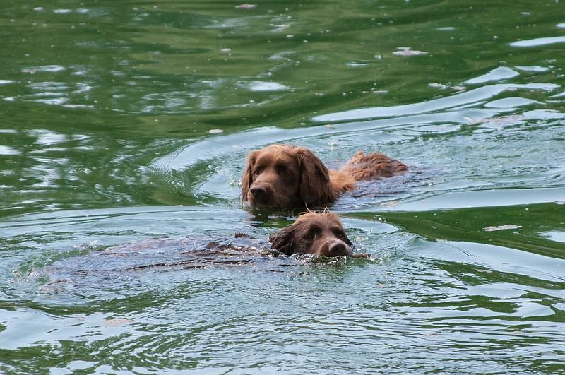 Askan und Higgins im See