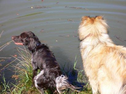 Baika und Askan am Teich