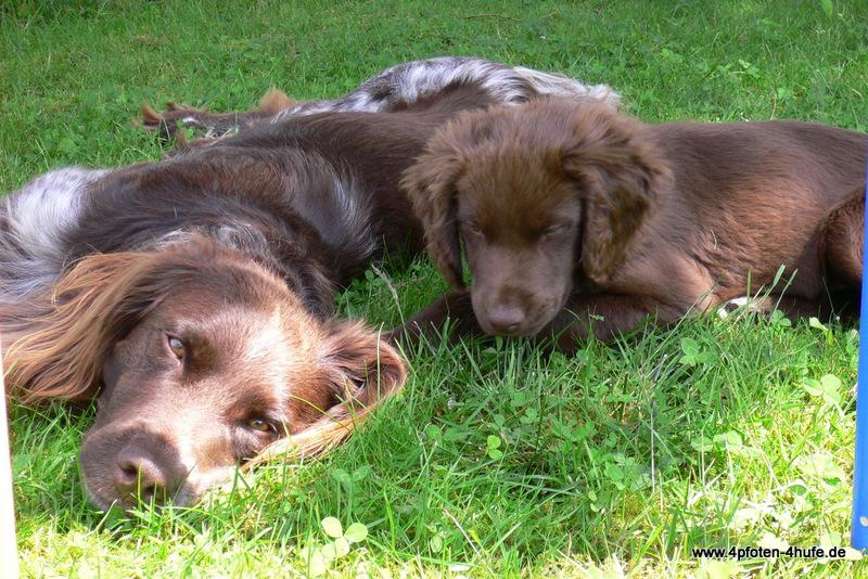 Askan und Higgins im Garten 23-6-09