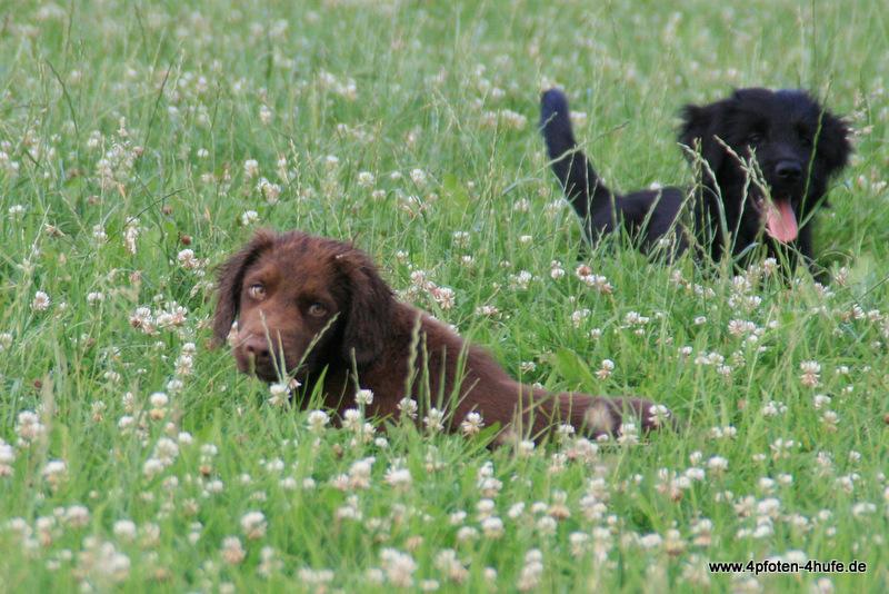 Verstecken im Gras