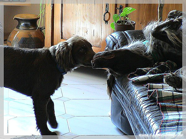 Higgins und Askan auf der Couch