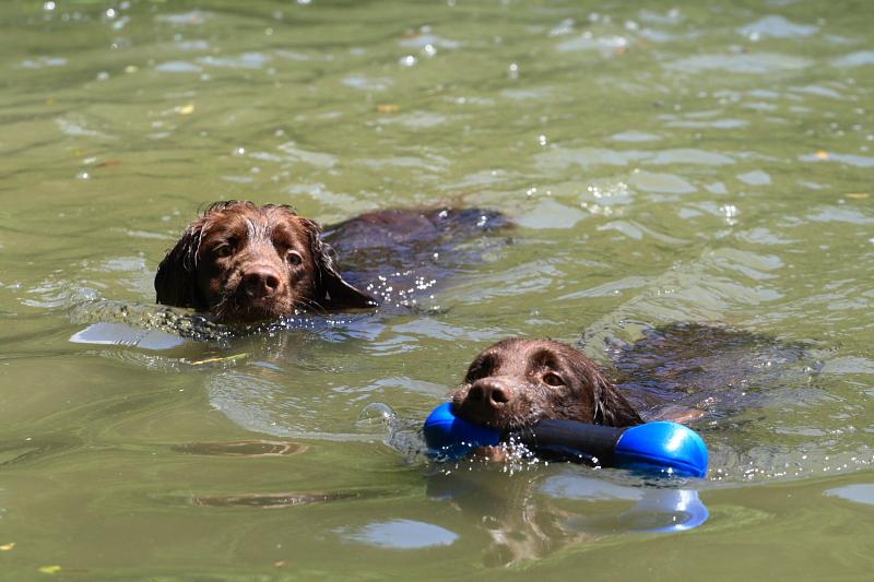 Schwimmen im Wispersee