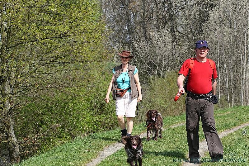 Spaziergang Rheinauen