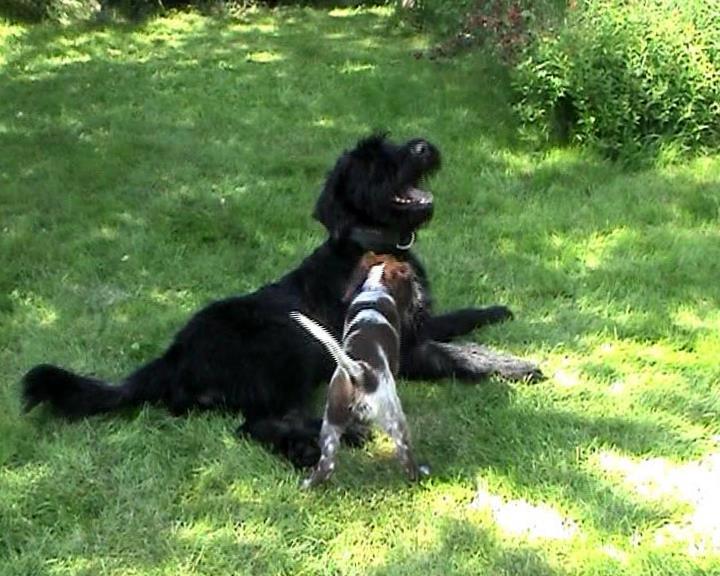 Max und Askan